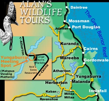 North Queensland location of Alan's Wildlife Tours